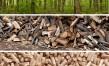 Le bois de chauffage : économie et écologie